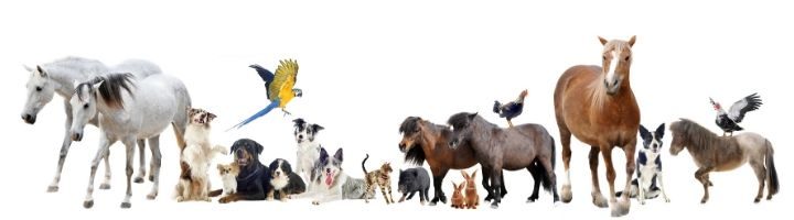 animals world veterinary day 2020